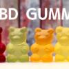 話題のCBDグミの【気になる効果】CBN配合グミの発売で注目される「食べる」CBD製品をご紹介します。