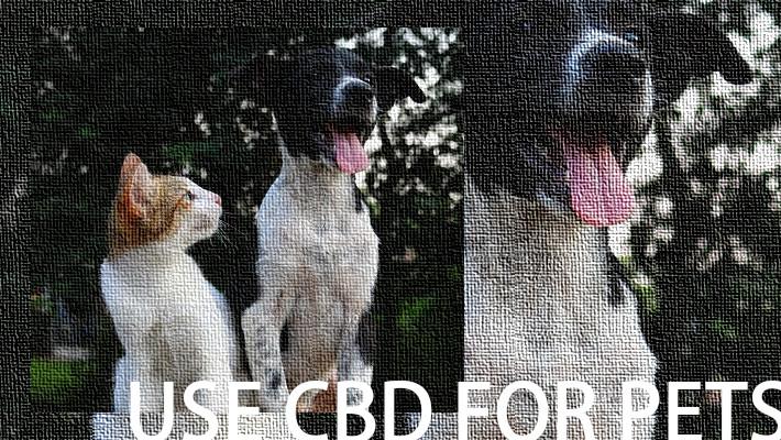 CBDはペットに使っても大丈夫?犬や猫への影響や注意点などについて紹介します。